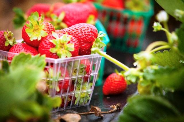 Φράουλες Διατροφικές Ιδιότητες