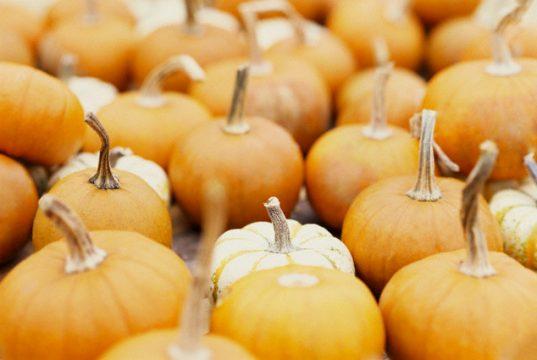 Τι Φρέσκο τρώμε τον Οκτώβρη